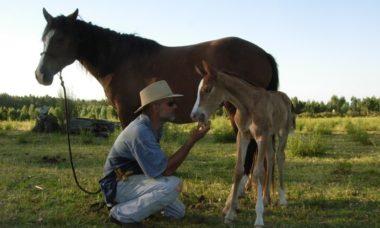 Fidel Sánchez Alayo comenta sobre La importancia de la confianza en los caballos