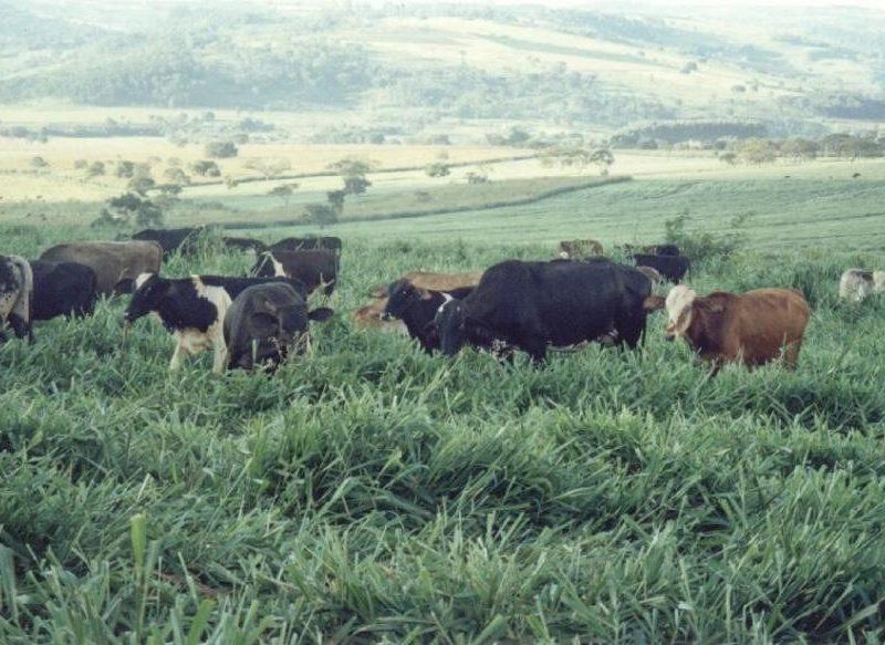 Agricultura y ganadería sostenible