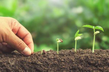 La innovación en la agricultura