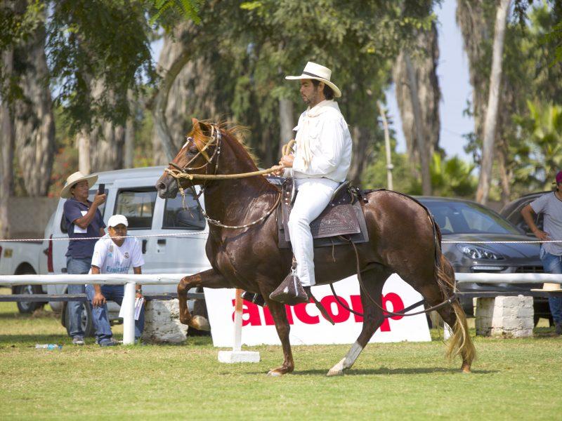 Concurso Nacional del Caballo Peruano de Paso