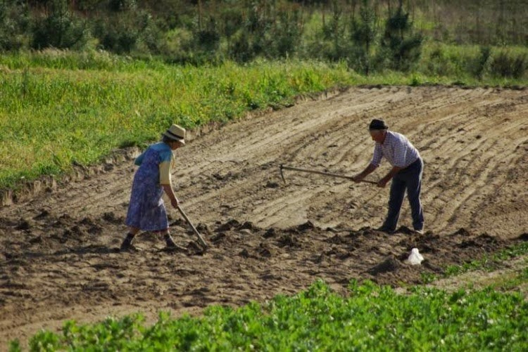 Diferencias entre agricultura tradicional y agricultura moderna