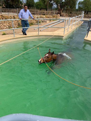 ¿Cómo hacer una piscina para caballos?