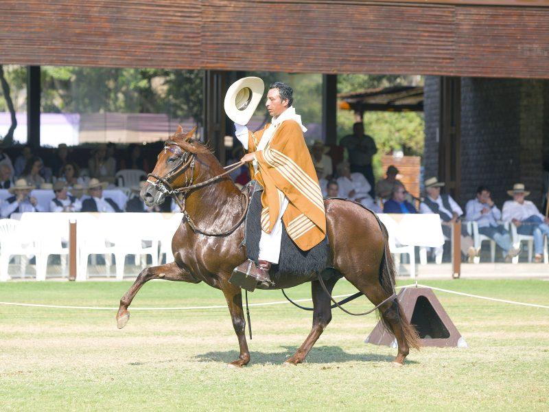 Andar del caballo de paso peruano