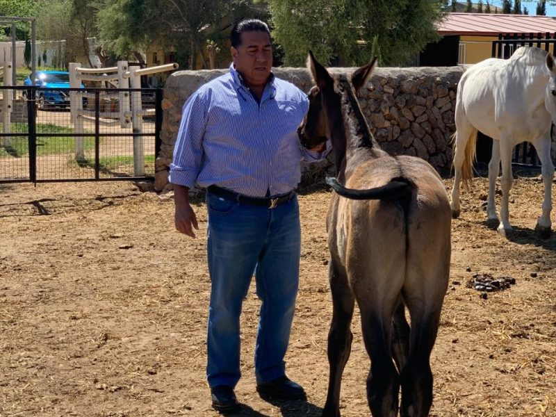 La doma clásica de caballos