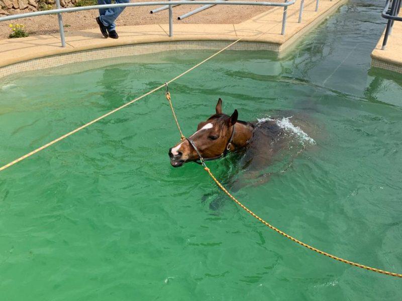 Beneficios de la hidroterapia en caballos