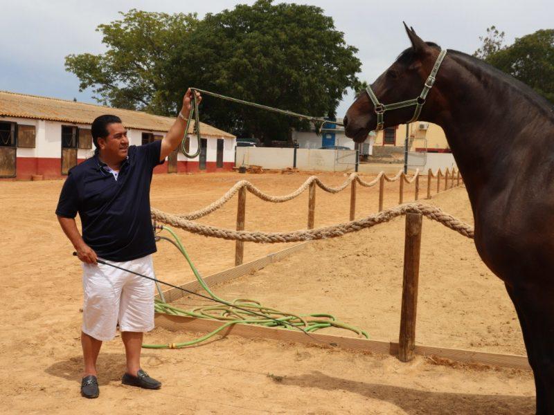 Cuidados básicos de un caballo