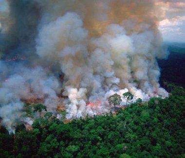 Acciones para detener la deforestación