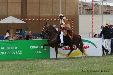 Utilidad del caballo de paso peruano