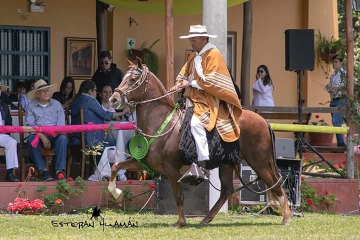 Curiosidades caballo de paso peruano