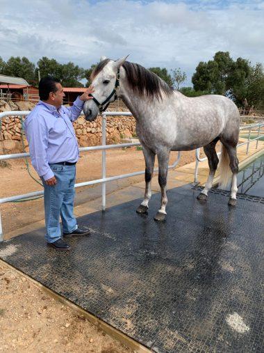 Fidel Sánchez Alayo - deshidratación del caballo
