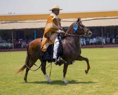 fidel-sanchez-alayo-mejores-caballos-paso