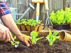 cultivo en casa tecnicas