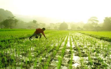 agricultura extensiva intensiva