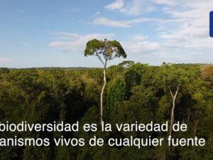 Que-es-la-biodiversidad